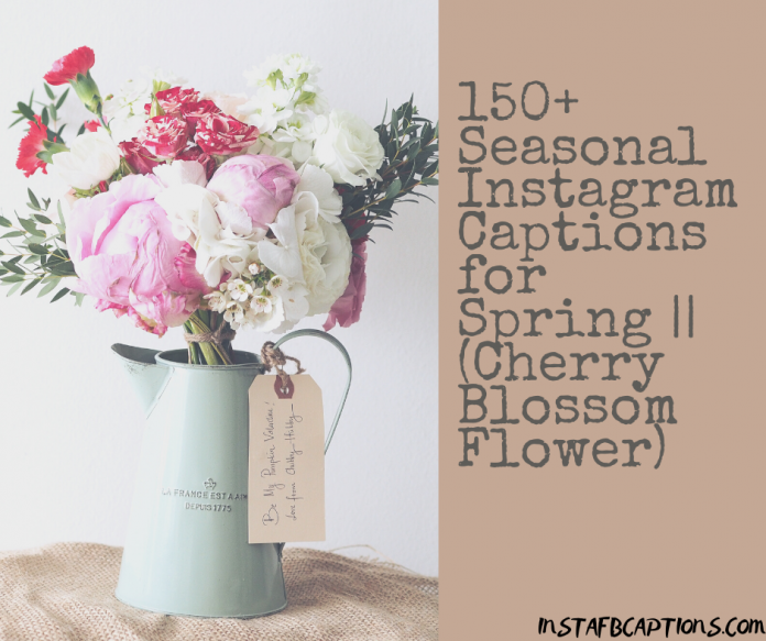 150+ Seasonal Instagram Captions For Spring || (cherry Blossom Flower)