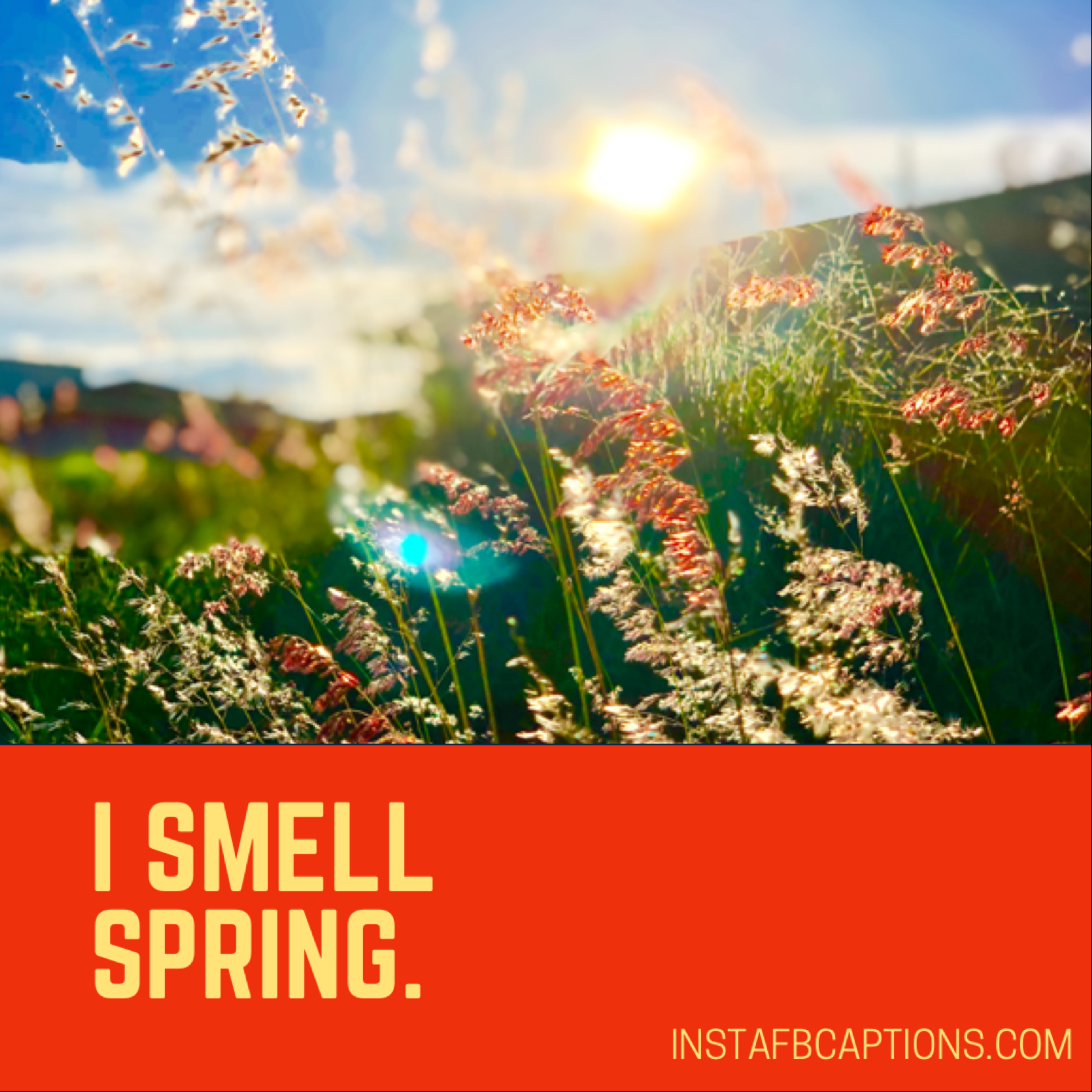 One word spring  - D3C769E1 EE2F 4853 B819 15E9F1756812 - 150+ Seasonal Instagram Captions for Spring || (Cherry Blossom Flower)
