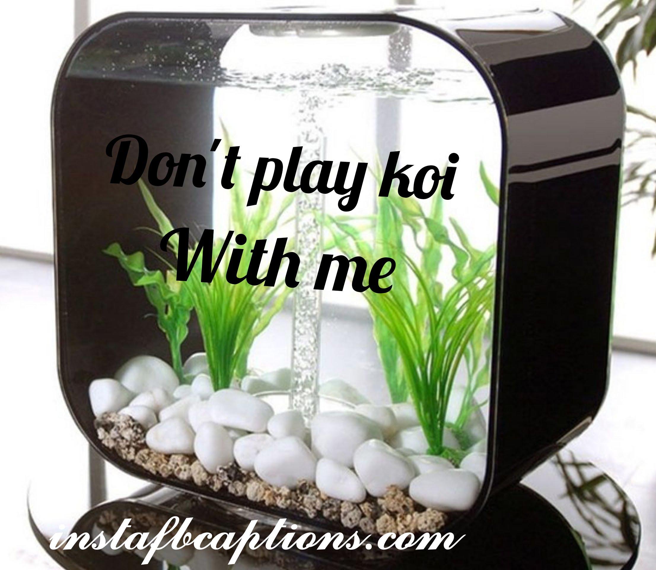 Img 20201024 203521  - IMG 20201024 203521 - Aquarium captions for Pet Fish||(cute planted nature)