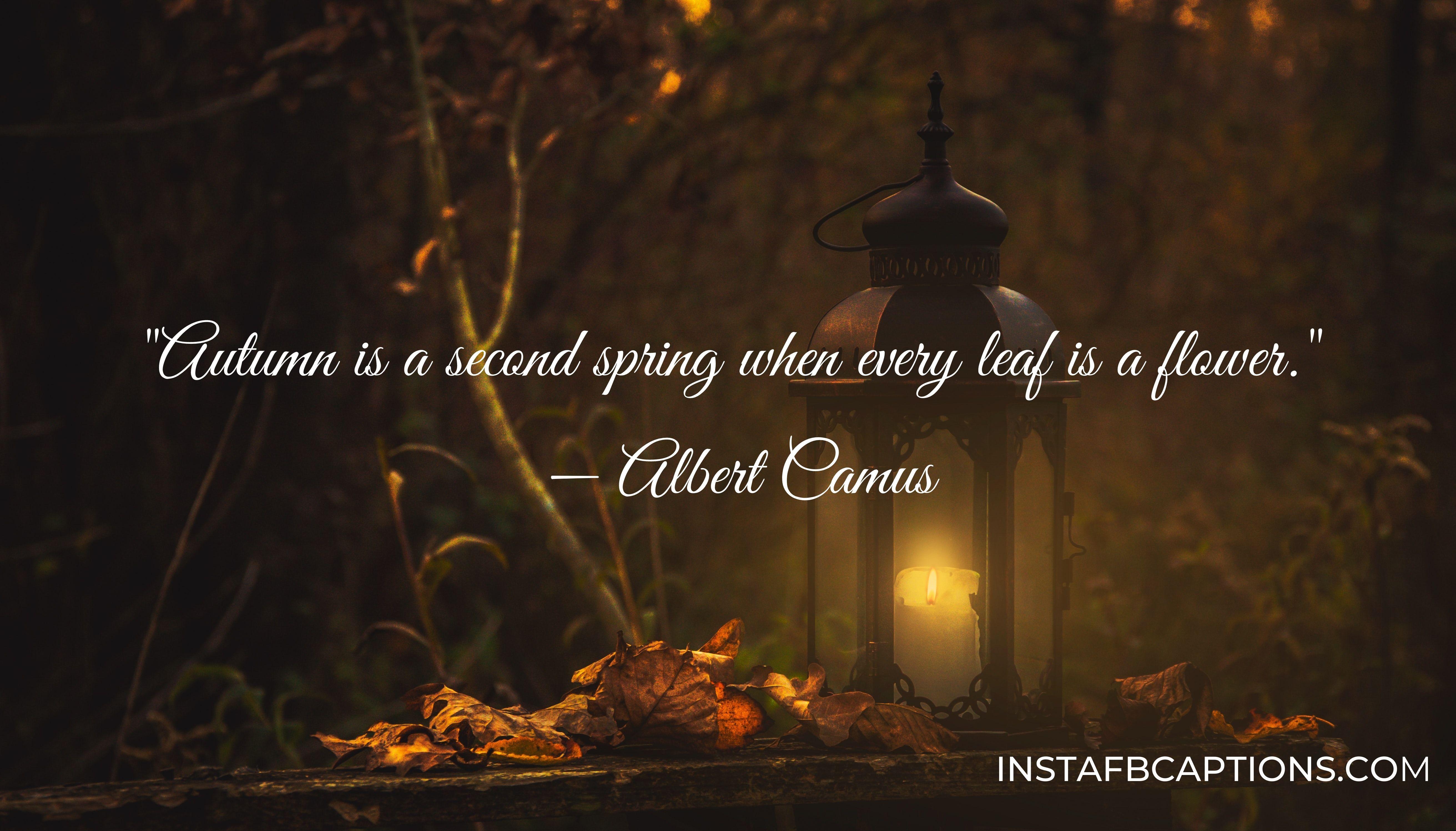 autumn inspirational quotes  - INSTAFBCAPTIONS - Autumn Fall Season Captions || (Leaf Pumpkin Selfie)