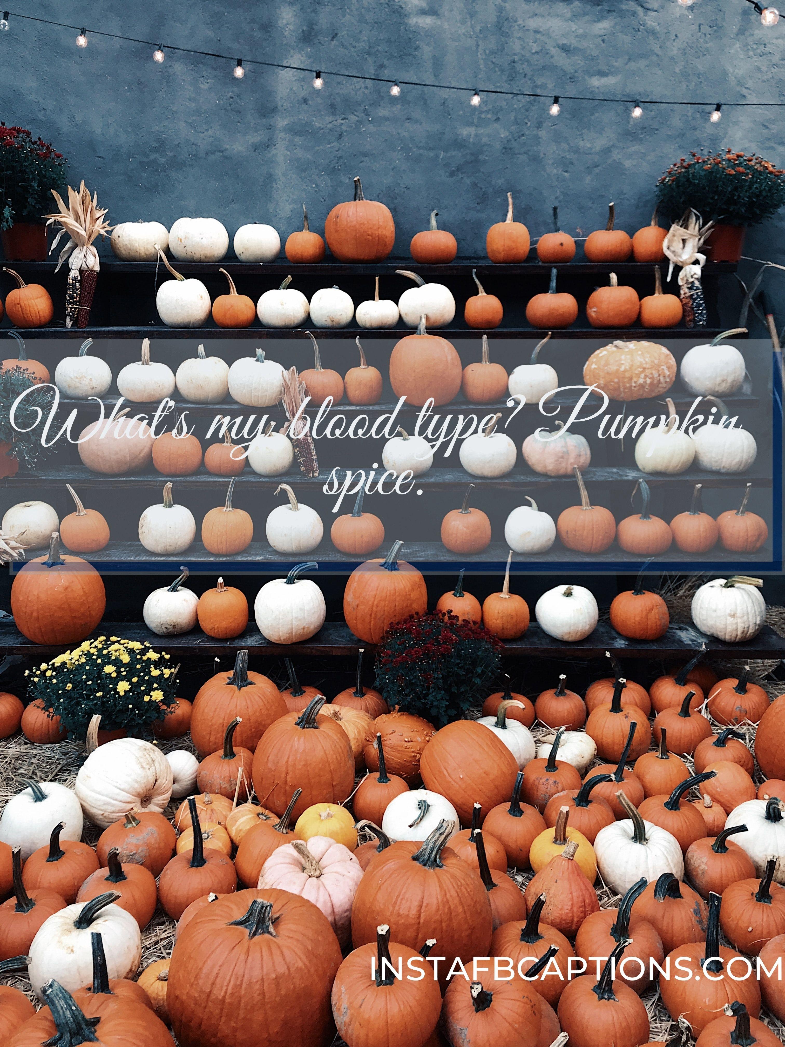 pumpkin instagram captions  - Whats my blood type  Pumpkin spice - Autumn Fall Season Captions || (Leaf Pumpkin Selfie)