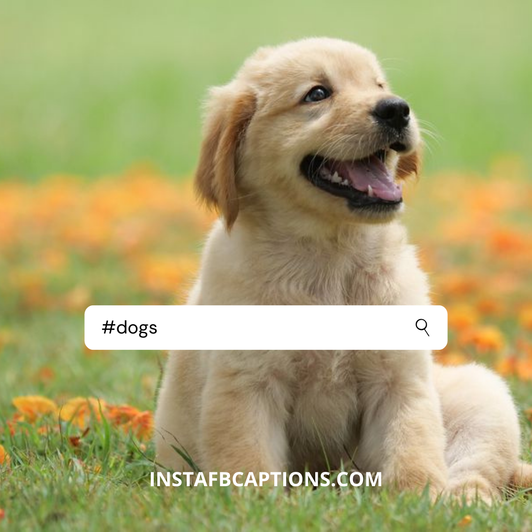 #dogs (1)  - dogs 1 - Instagram Hashtags 2020 – The Only Guide You Need.