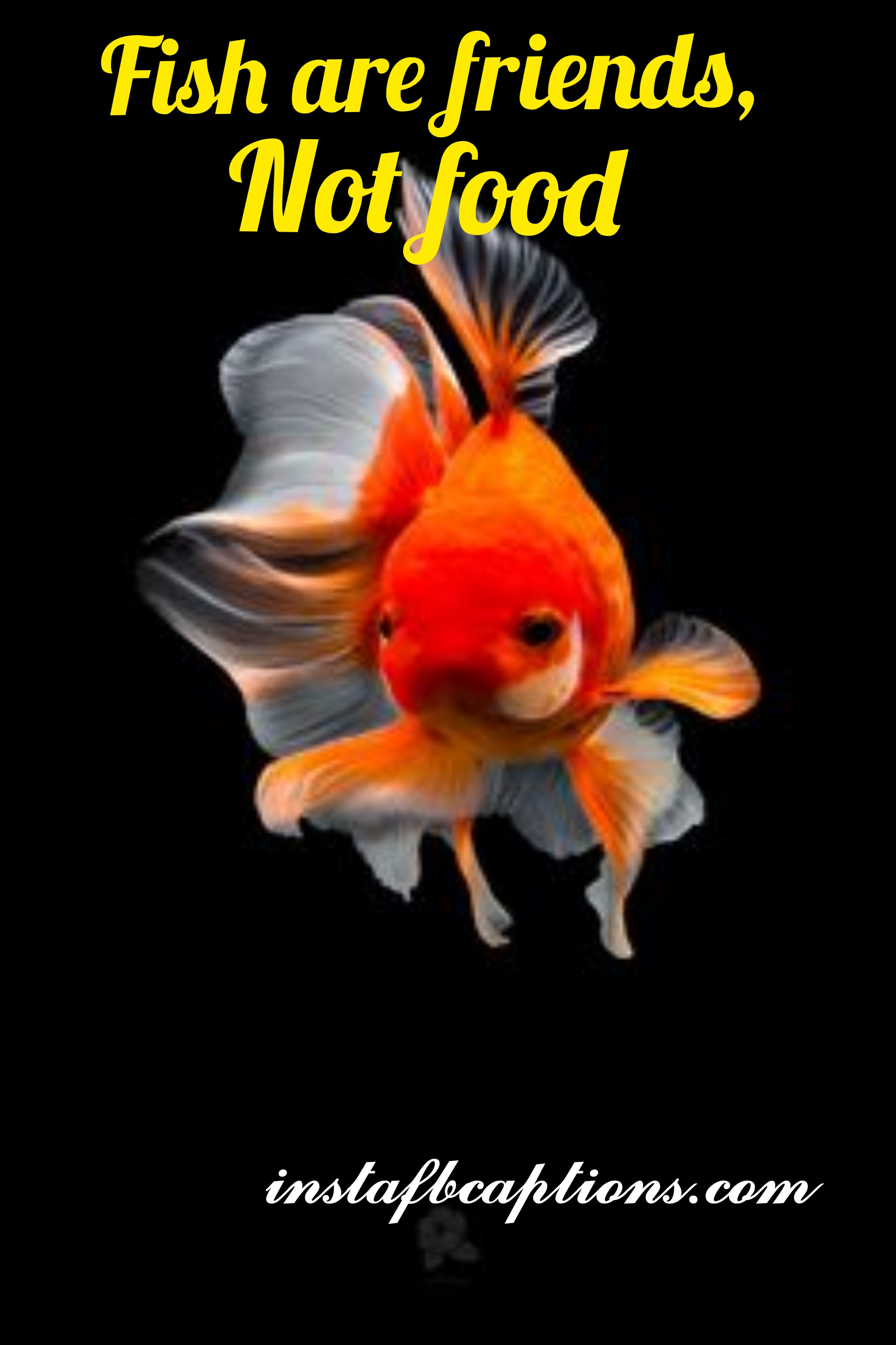 Fishes Are Friends Not Food  - fishes are friends not food - Aquarium captions for Pet Fish||(cute planted nature)