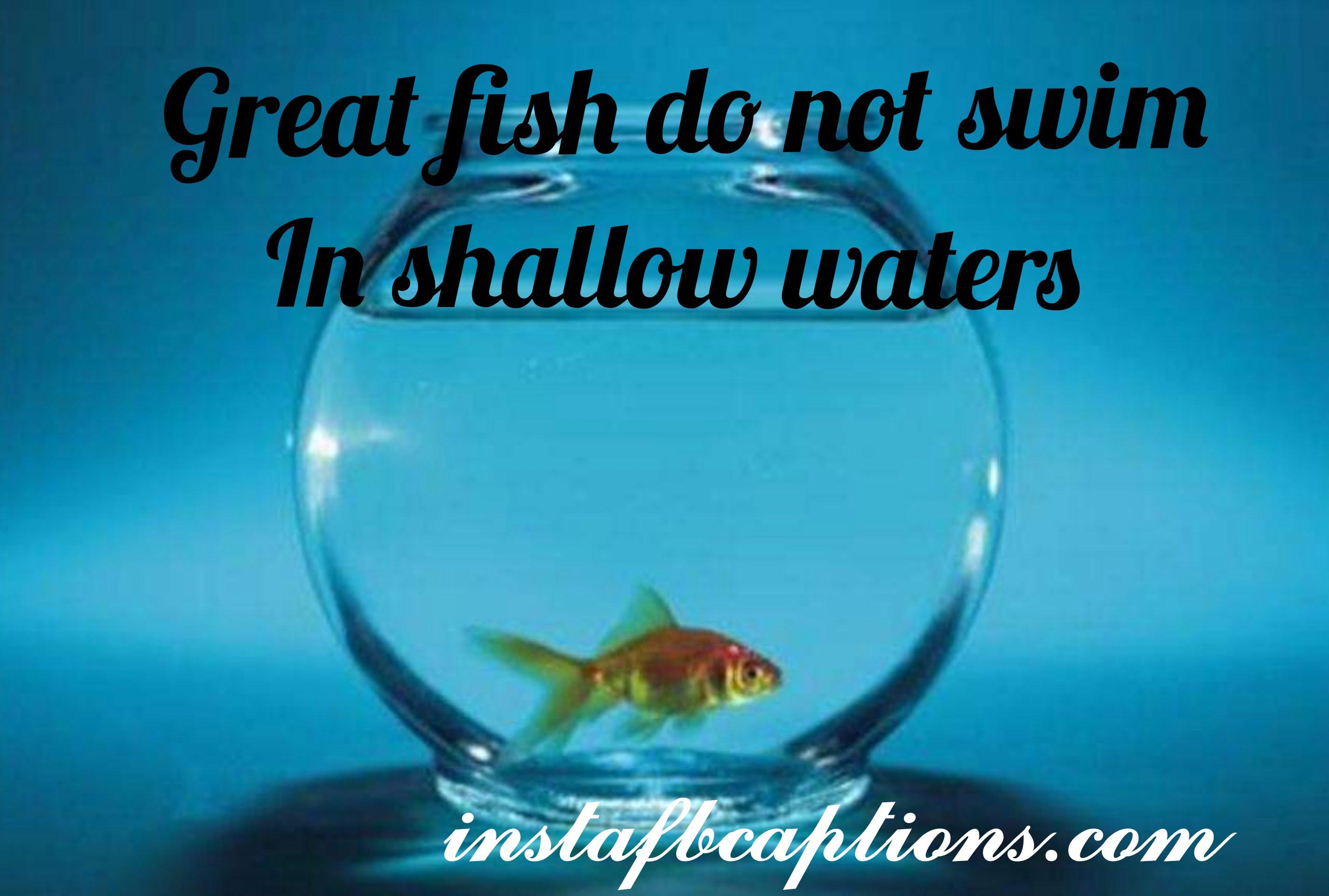 Good Fish Donot Swim In Swallow Water  - good fish donot swim in swallow water - Aquarium captions for Pet Fish||(cute planted nature)