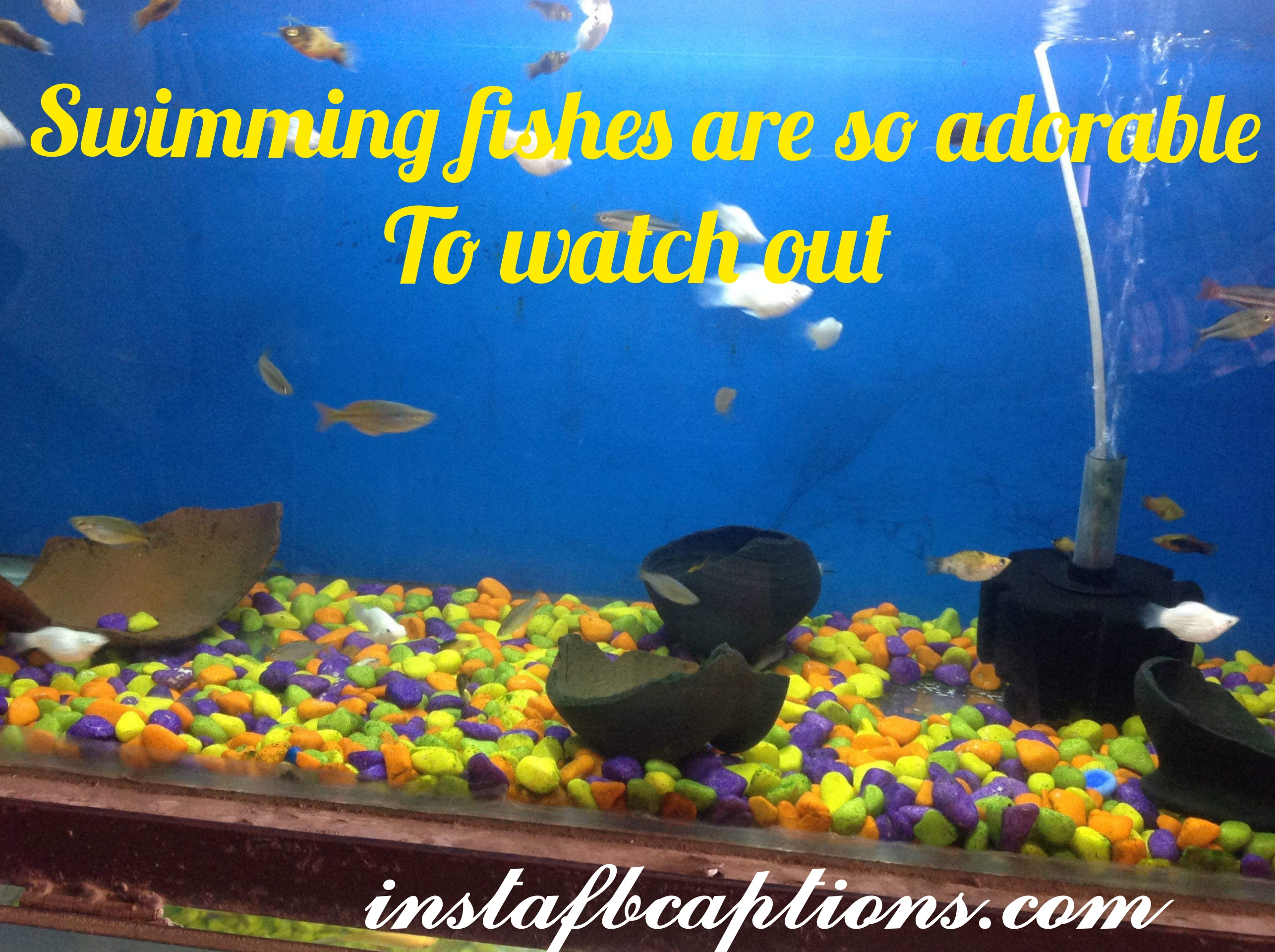 Swimming Fishes Are Adorable To Watch Out  - swimming fishes are adorable to watch out - Aquarium captions for Pet Fish||(cute planted nature)