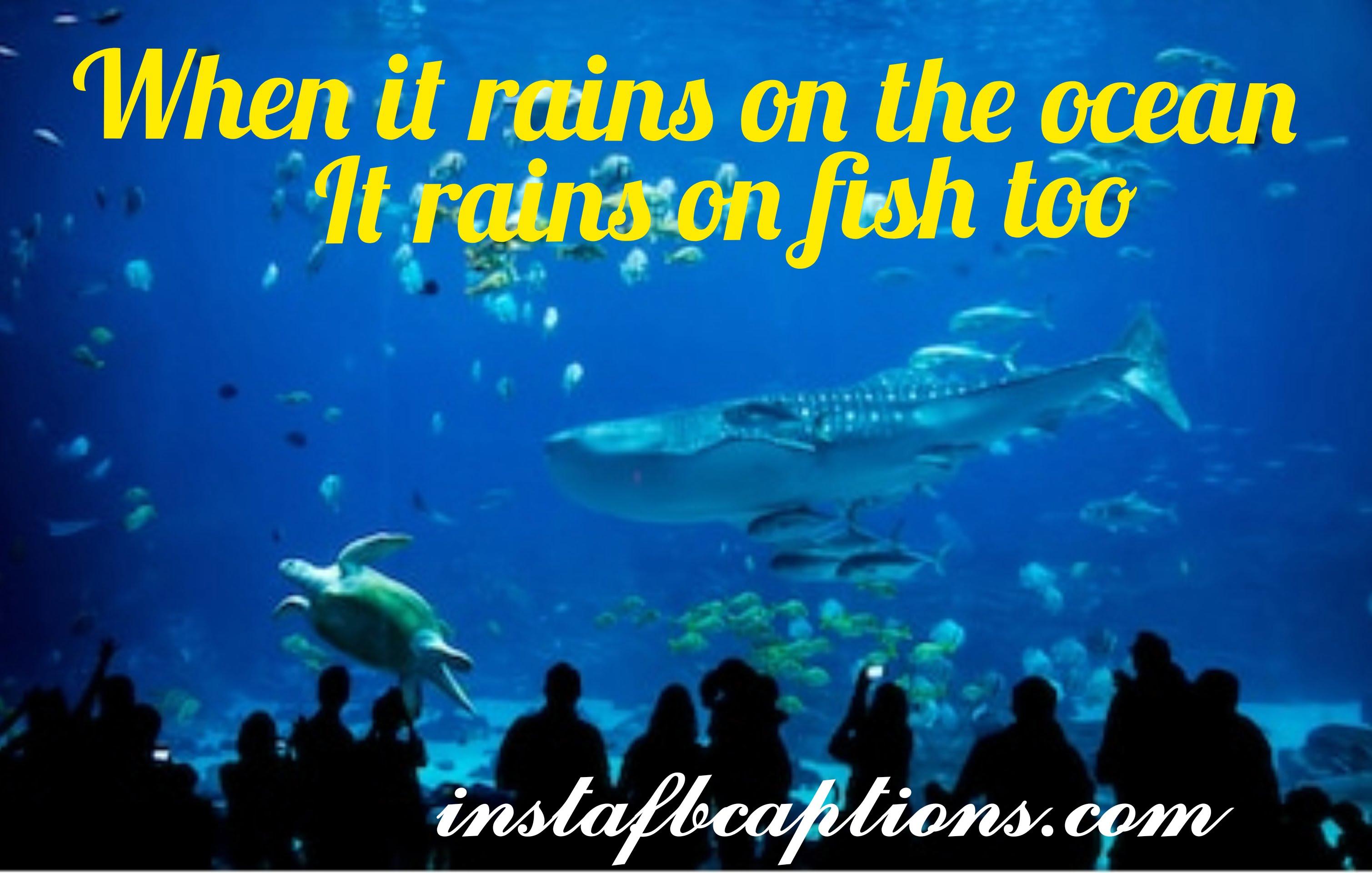 When It Rains In The Ocean It Rains On Fish Too  - when it rains in the ocean it rains on fish too - Aquarium captions for Pet Fish||(cute planted nature)