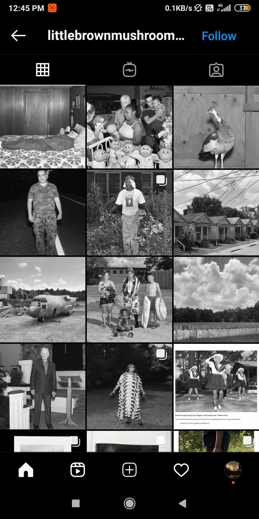 @littlebrownmushroom  -  littlebrownmushroom - 43 Best PHOTOGRAPHY Instagram Accounts  – PHOTOGRAPHERS to Follow Right Now