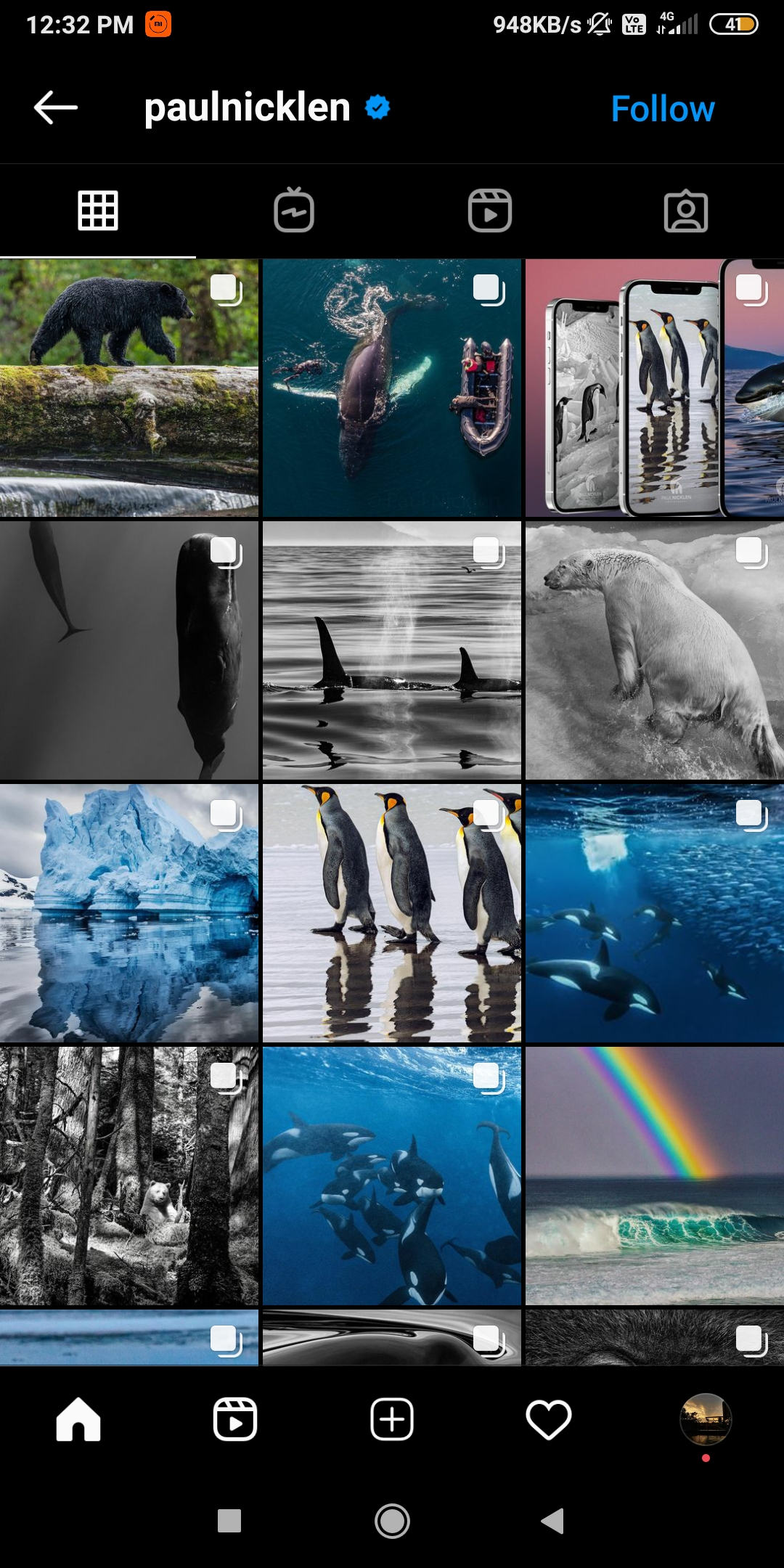 @paulnickle  -  paulnicklen - 43 Best PHOTOGRAPHY Instagram Accounts  – PHOTOGRAPHERS to Follow Right Now