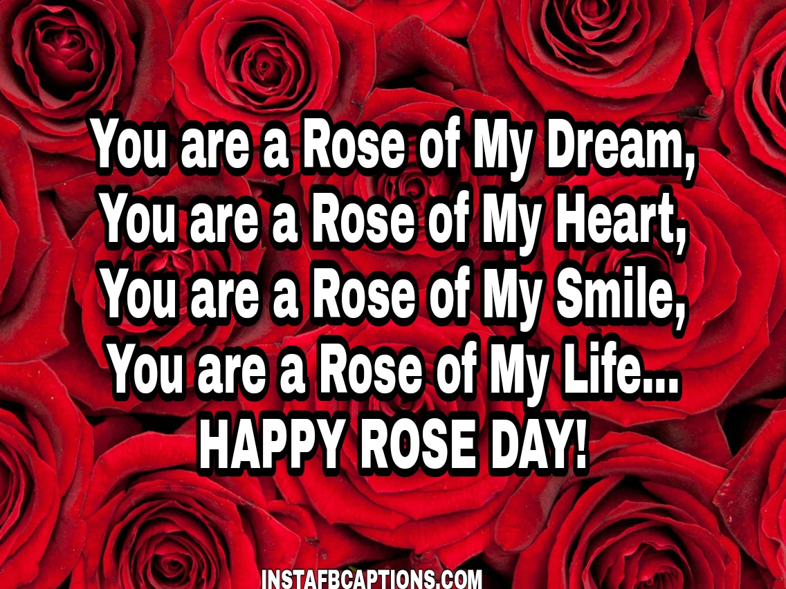 Rose Day Whatsapp Status And Messages  - Rose Day Whatsapp Status and messages - 250+ ROSE DAY Instagram Captions & Quotes 2021