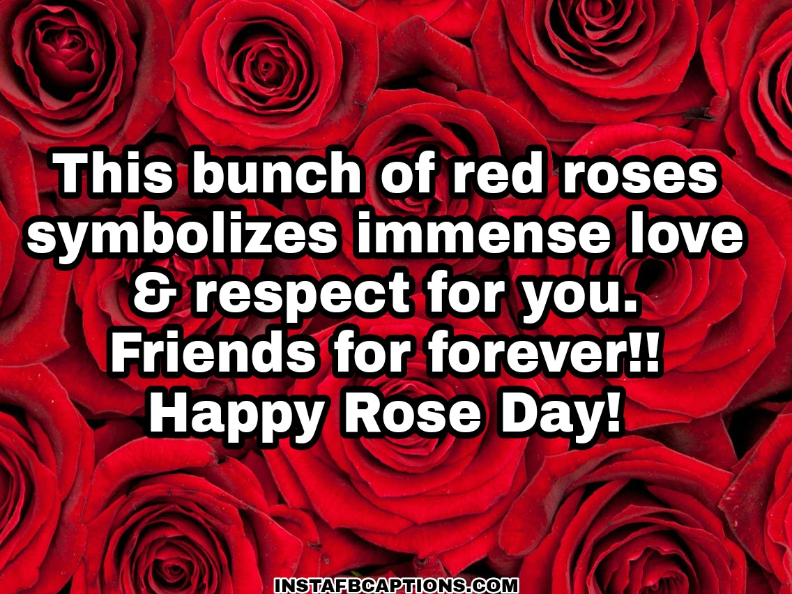 Rose Day Quotes For Friends  - Rose Day quotes for Friends - 250+ ROSE DAY Instagram Captions & Quotes 2021