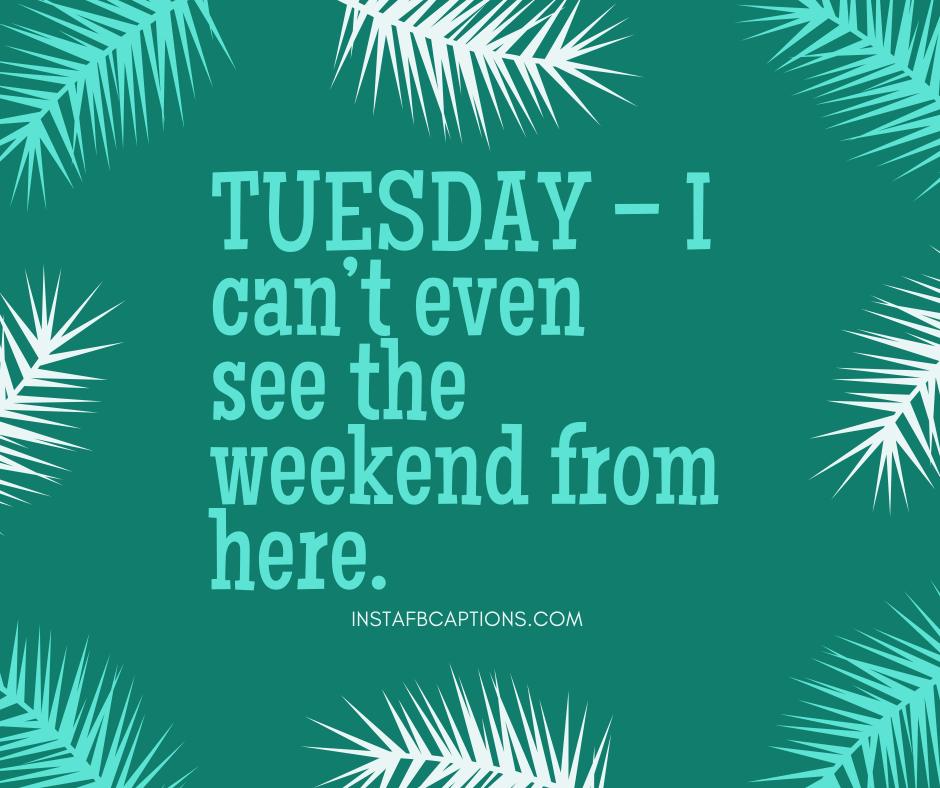Funny Tuesday Captions  - Funny Tuesday Captions - 50+ TUESDAY Instagram Captions 2021