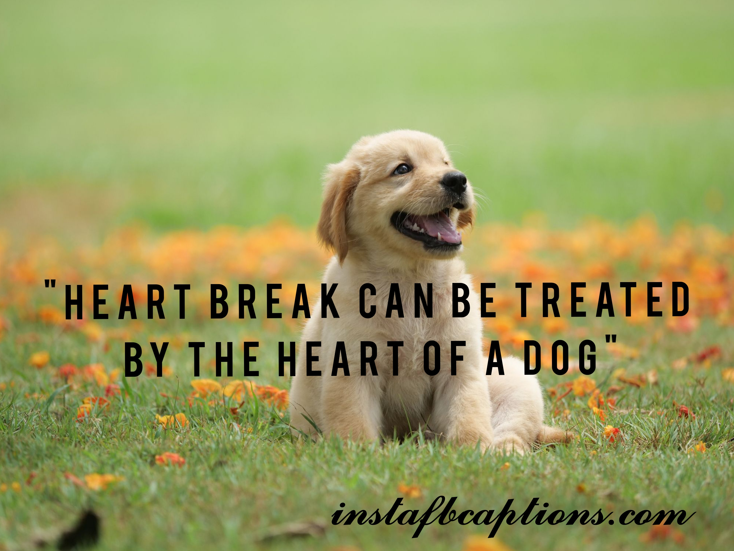 Love Dog Captions  - Love Dog Captions - 150+ DOGS & PUPPY Instagram Captions for Dog Lovers 2021
