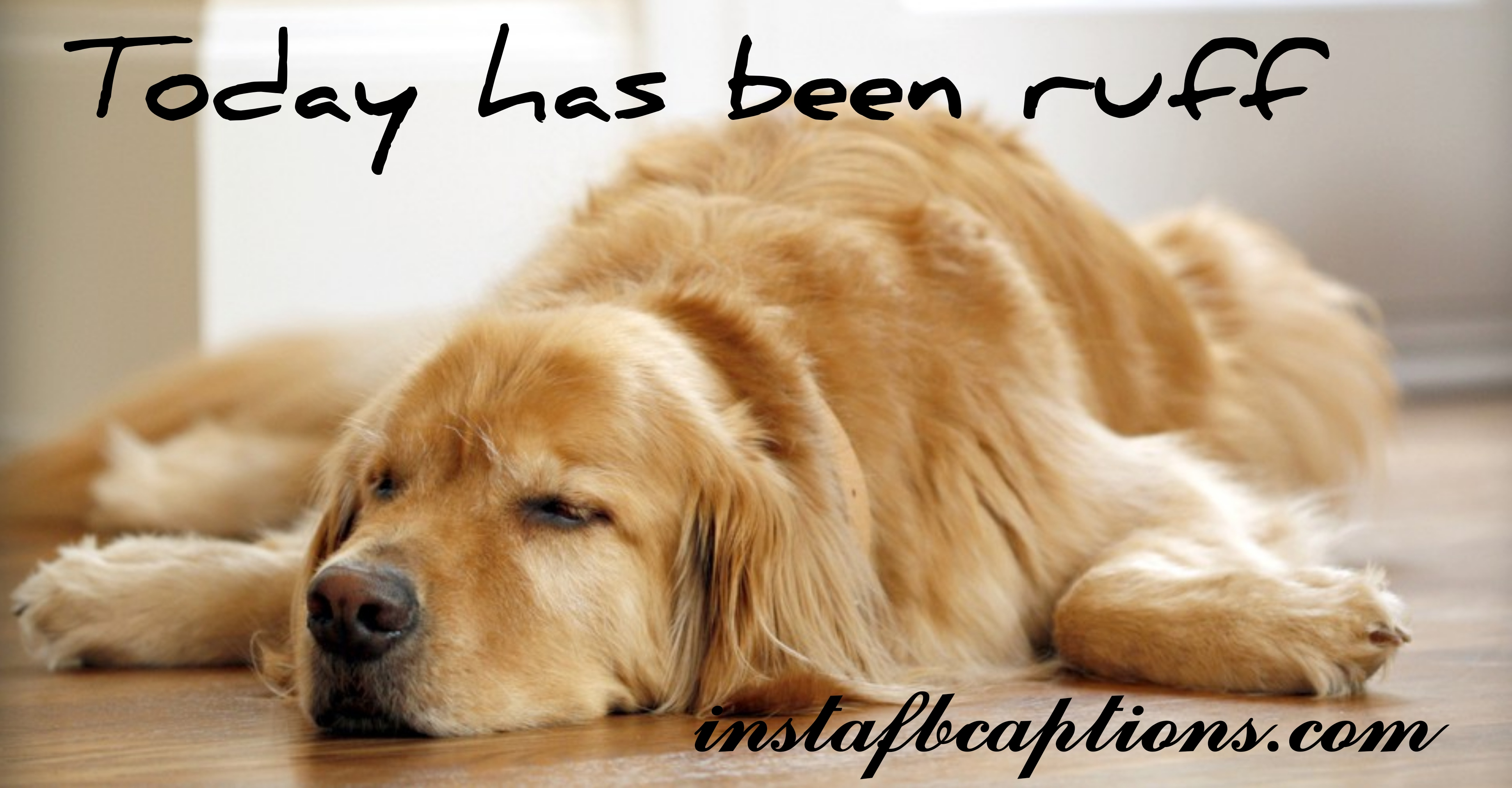 Sleeping Dog Captions  - Sleeping Dog Captions - 150+ DOGS & PUPPY Instagram Captions for Dog Lovers 2021