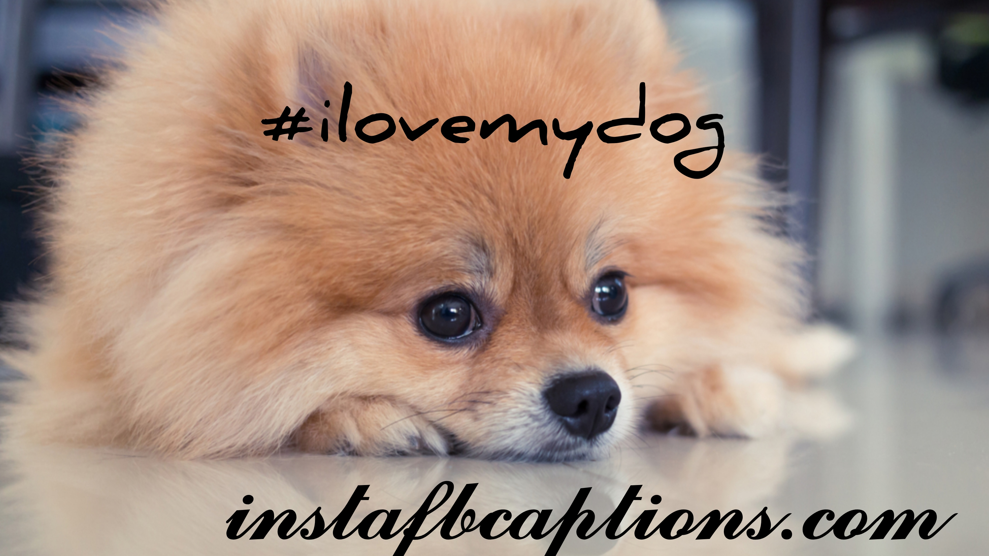 Dog Hashtags  - dog hashtags - 150+ DOGS & PUPPY Instagram Captions for Dog Lovers 2021