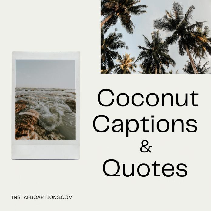 Coconut Captions & Quotes