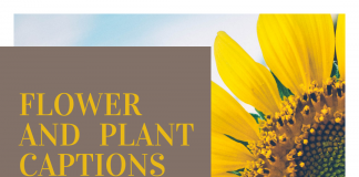 Flower And Plant Captions For Instagram