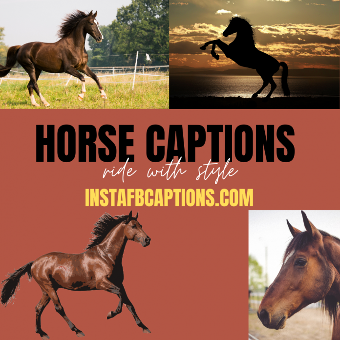 Horse Captions